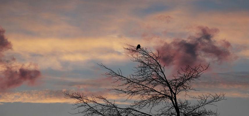 early birds1